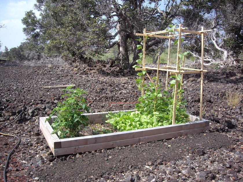 1-Entire raised bed